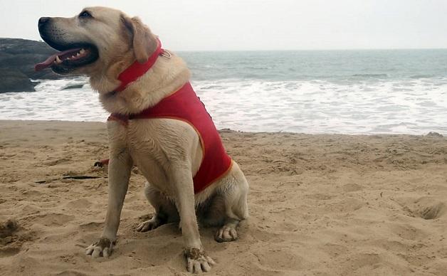do surf cachorro salva vidas 1.jpeg