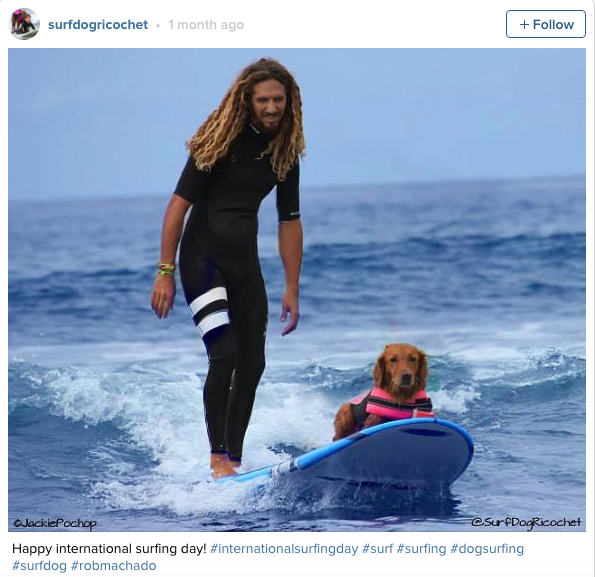 do surf dogs cachorros 4.png